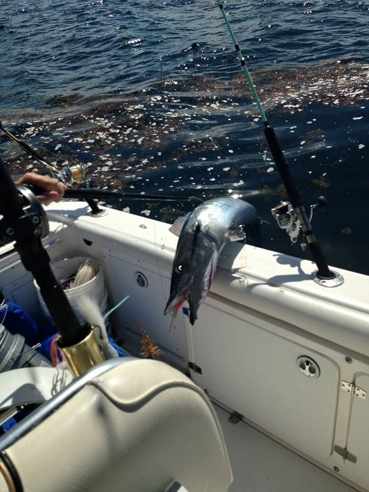 Large Wahoo on Side of Boat