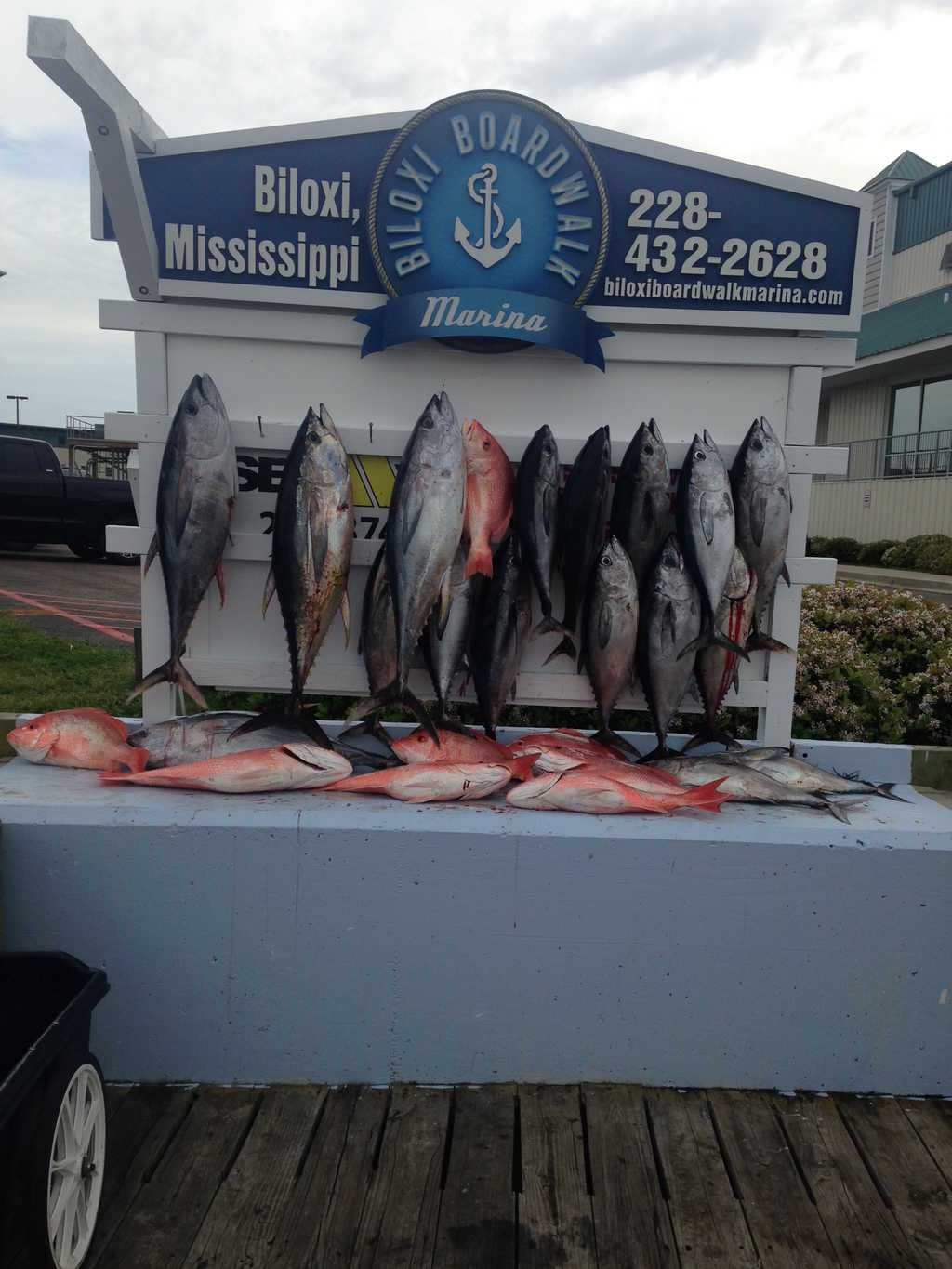 Tuna and Red Snapper Fishing Trip Biloxi, MS