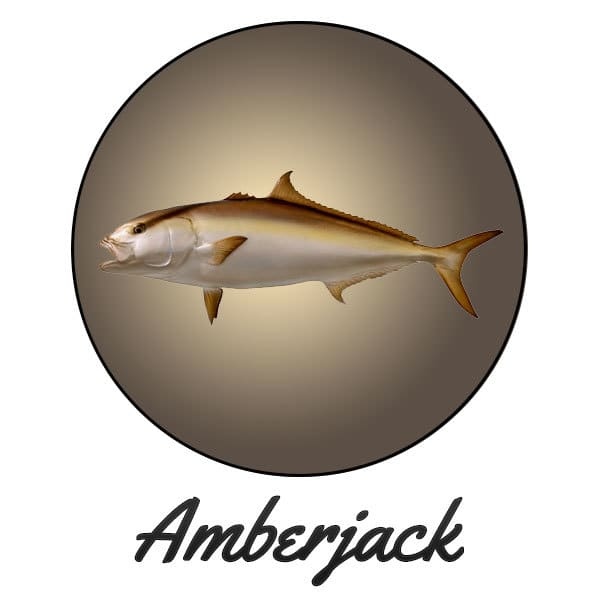 Amberjack Fishing Gulf Coast