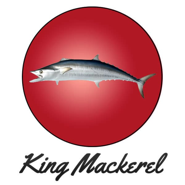 King Mackeral Fishing Gulf Coast MS