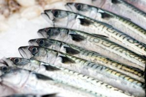 Mackerels fish in close up view
